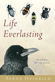 Cover art for LIFE EVERLASTING