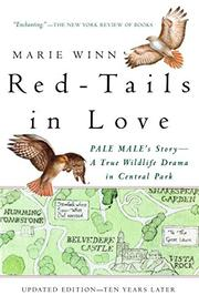 RED-TAILS IN LOVE: A Wildlife Drama in Central Park by Marie Winn