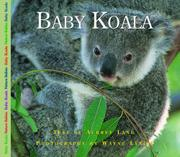 BABY KOALA by Aubrey Lang