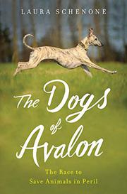 THE DOGS OF AVALON by Laura  Schenone