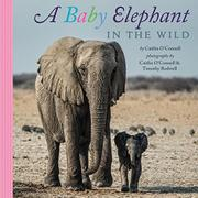 A BABY ELEPHANT IN THE WILD by Caitlin O'Connell