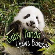 BABY PANDA CHEWS BAMBOO by Ben Richmond