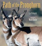 PATH OF THE PRONGHORN by Cat Urbigkit