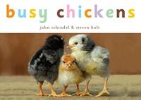 BUSY CHICKENS