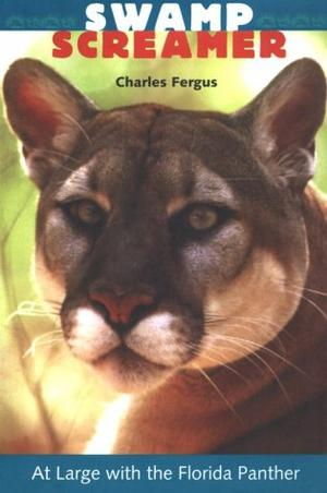 SWAMP SCREAMER: At Large with the Florida Panther